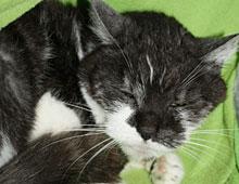 Notfall alte Katze Tierheim Bonn