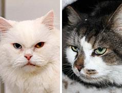 Notfall Katzen Tierheim Bonn