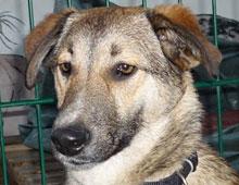Notfall Hund Tierheim Bonn
