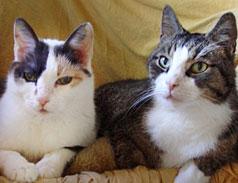 Notfall Katzen im Tierheim Bonn