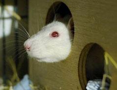 Notfall Ratte im Tierheim Bonn