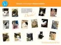 Katzen Vermittlung