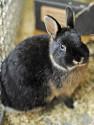 Kaninchen Dori
