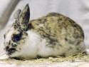 Kaninchen Sophie