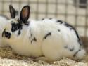 Kaninchen Esmeralda