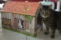 und Katzenhaus