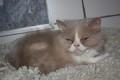 Finn & Fee 24051