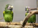 Papageienpaar_MG_4574