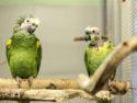 Papageienpaar_MG_4575