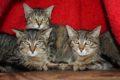 n-kitten-nippenkreuz3