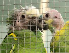 Notfall Amazonen im Tierheim Bonn