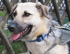 Notfall Hund im Tierheim Bonn