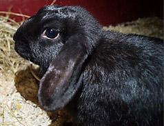 Notfall Kaninchen im Tierheim Bonn