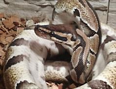 Python in Not im Tierheim Bonn