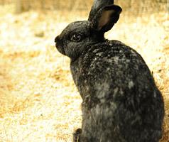 Kaninchen Notfall im Tierheim Bonn