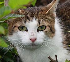 Katze Notfall im Tierheim Bonn
